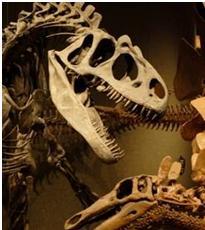 dino squelette